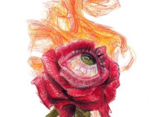 Rosa ardiente