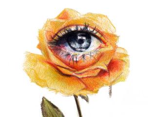 Rosa llorosa