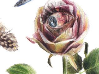 Rosa del aire