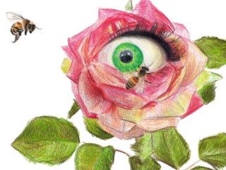 Rosa melosa
